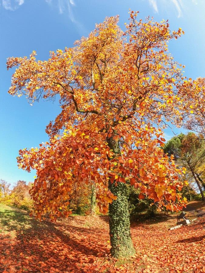 Opinião da ilustração de árvores coloridas do outono fotografia de stock