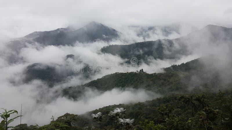 Opinião da longa distância de mais cloudforest foto de stock