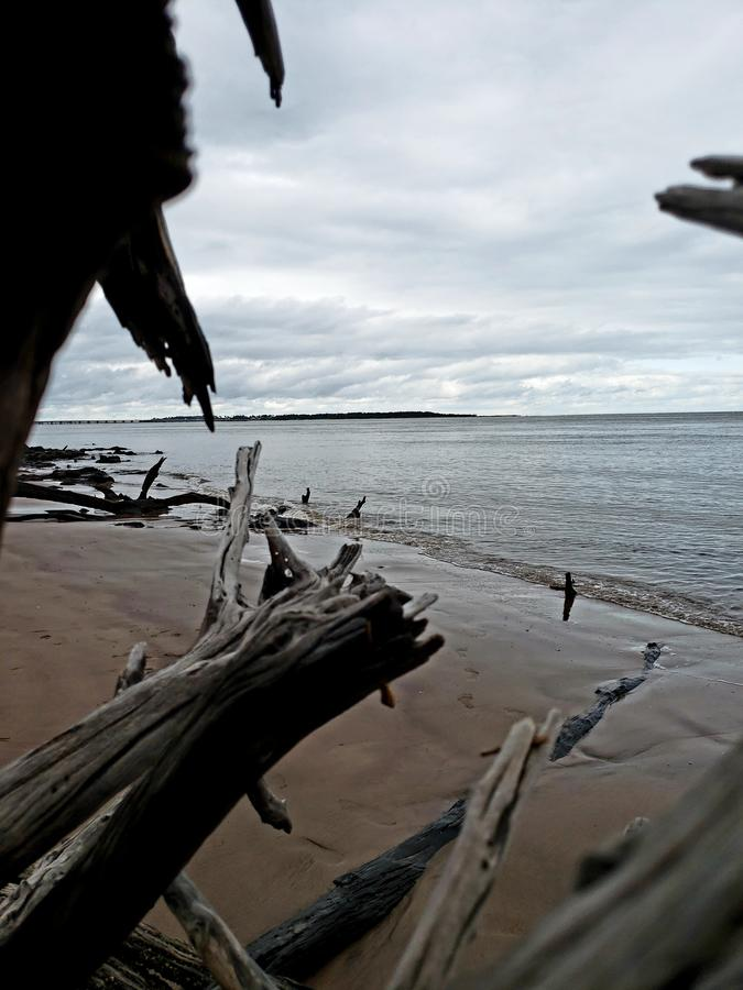 Opinião da madeira lançada à costa imagens de stock