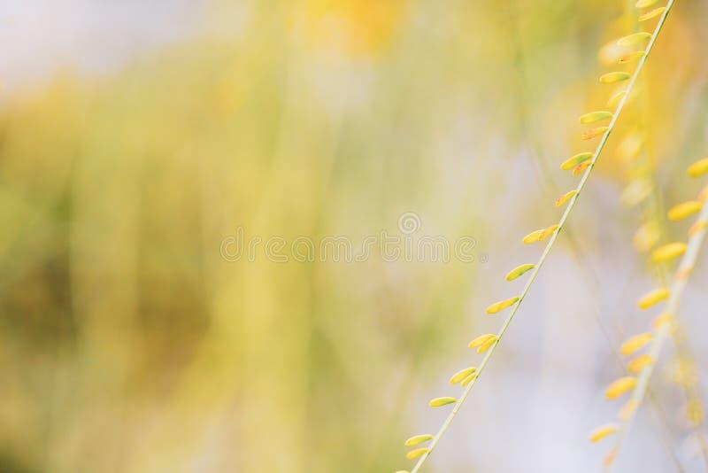 Opinião da natureza do close up da folha verde em um fundo bonito do bokeh da natureza no jardim com espaço da cópia Conceito do  imagens de stock