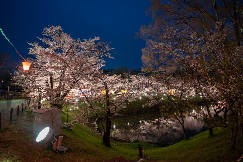 Opinião da noite das flores de cerejeira da flor completa no castelo de Ueda em Nagano fotografia de stock