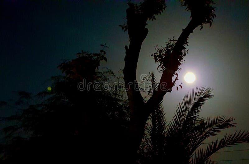 opinião da noite da lua imagem de stock royalty free