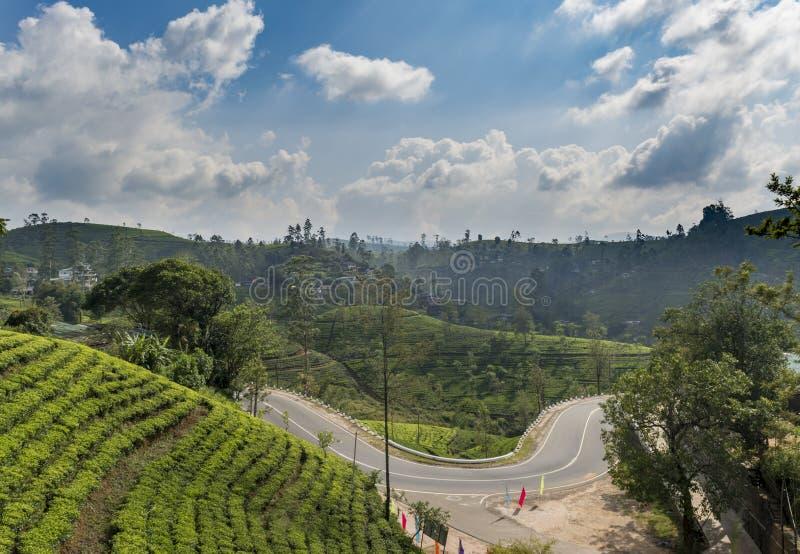 Opinião da paisagem das plantações de chá e próximo de surpresa pela estrada foto de stock