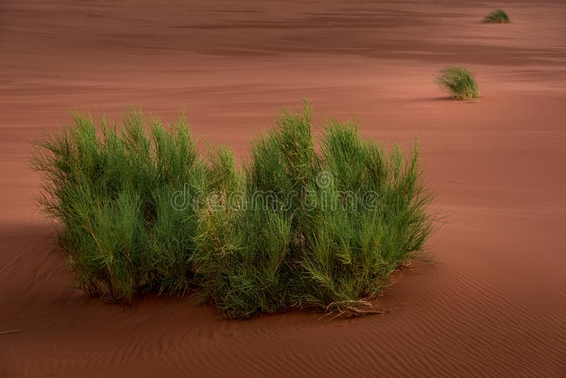Opinião da paisagem de arbustos verdes no deserto imagem de stock royalty free