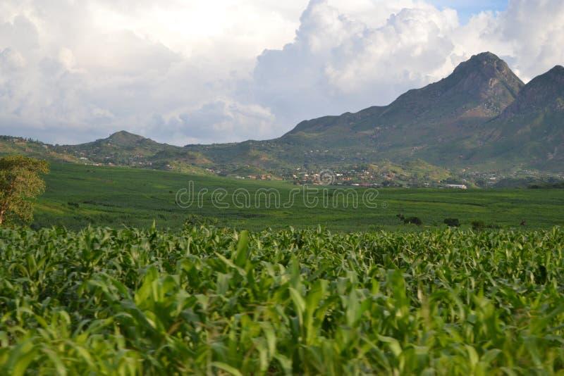 Opinião da paisagem de Blantyre, Malawi em África imagens de stock royalty free