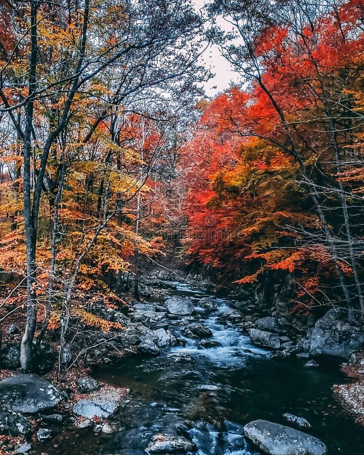 Opinião da paisagem do córrego da montanha do outono Ridge Mountains azul na queda fotografia de stock royalty free