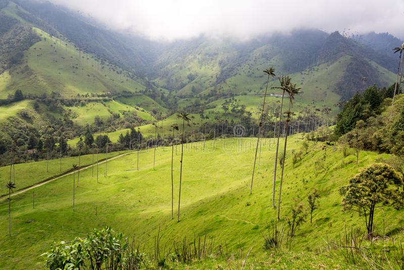 Opinião da paisagem do vale de Cocora imagem de stock