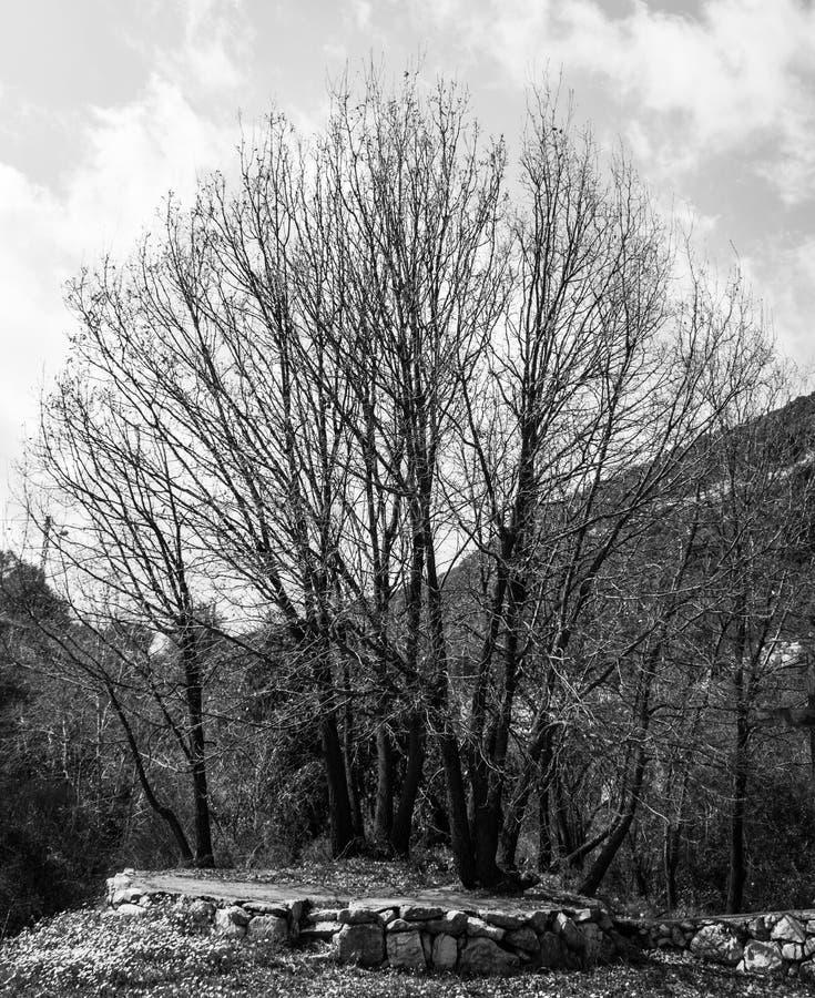 Opinião da paisagem em Líbano norte das montanhas e da floresta fotos de stock