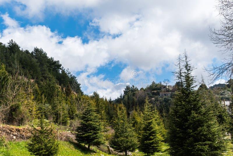 Opinião da paisagem em Líbano norte das montanhas e da floresta foto de stock royalty free