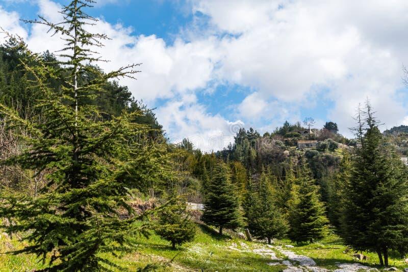 Opinião da paisagem em Líbano norte das montanhas e da floresta fotografia de stock royalty free