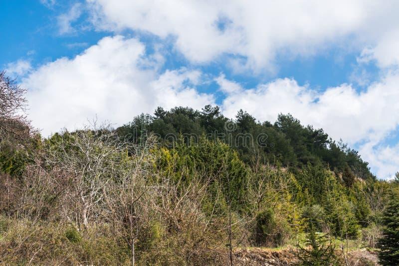 Opinião da paisagem em Líbano norte das montanhas e da floresta fotografia de stock