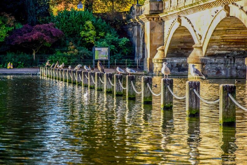 Opinião da paisagem Serpentine Lake e Serpentine Bridge em Hyde Park, Londres, Reino Unido imagem de stock