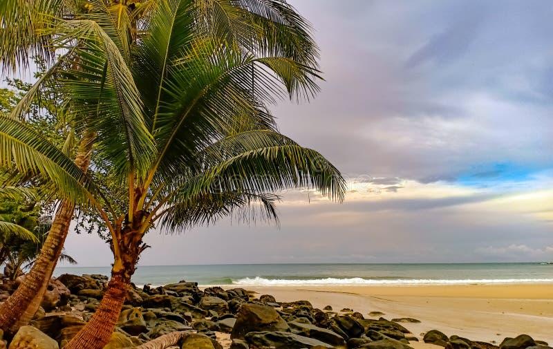 Opinião da praia da árvore com rochas foto de stock royalty free