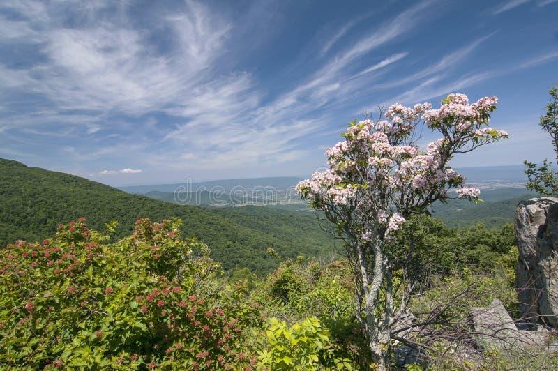 Opinião da primavera das montanhas foto de stock royalty free