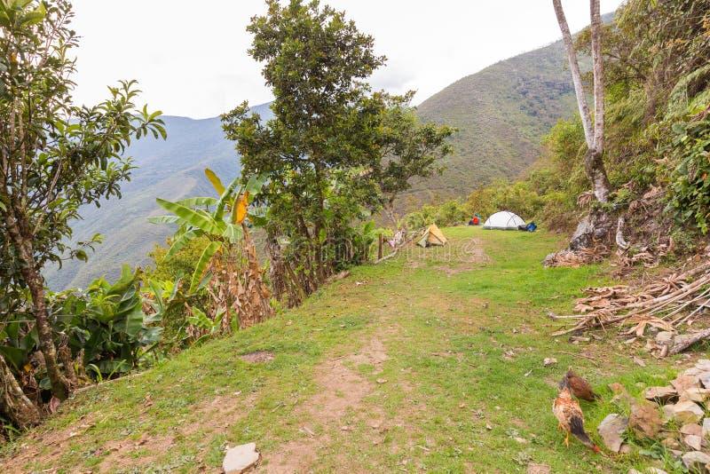 Opinião da selva das montanhas do prado das barracas de acampamento, passeio na montanha do EL Choro, Bolívia imagem de stock