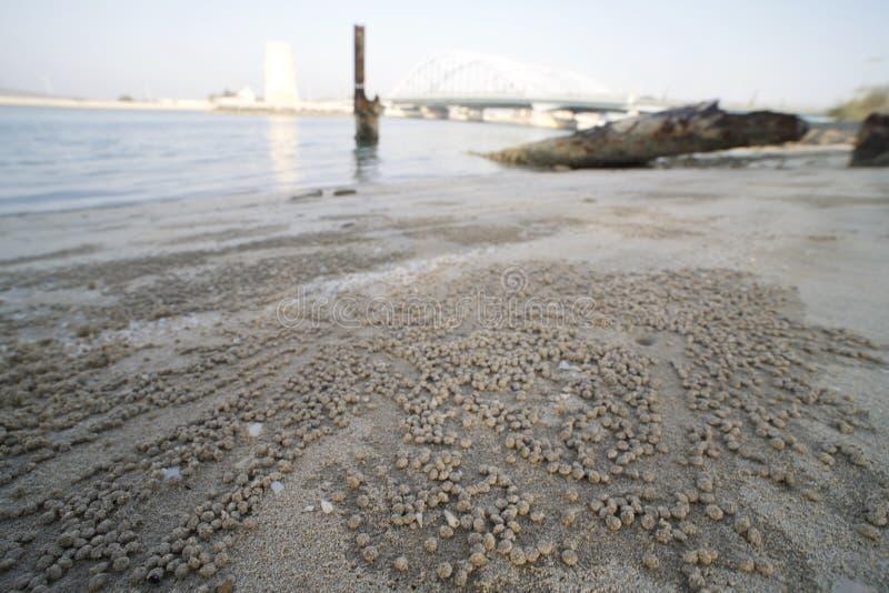 Opinião da terra do caranguejo do bebedoiro automático da areia da praia fotos de stock royalty free