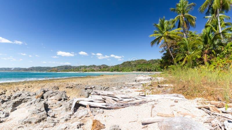 Opinião das palmas de Costa Rica da praia do Samara imagem de stock royalty free