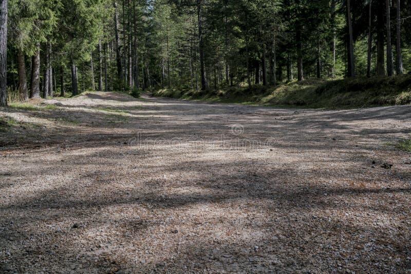 Opinião de baixo ângulo de uma estrada através de uma floresta imagens de stock royalty free
