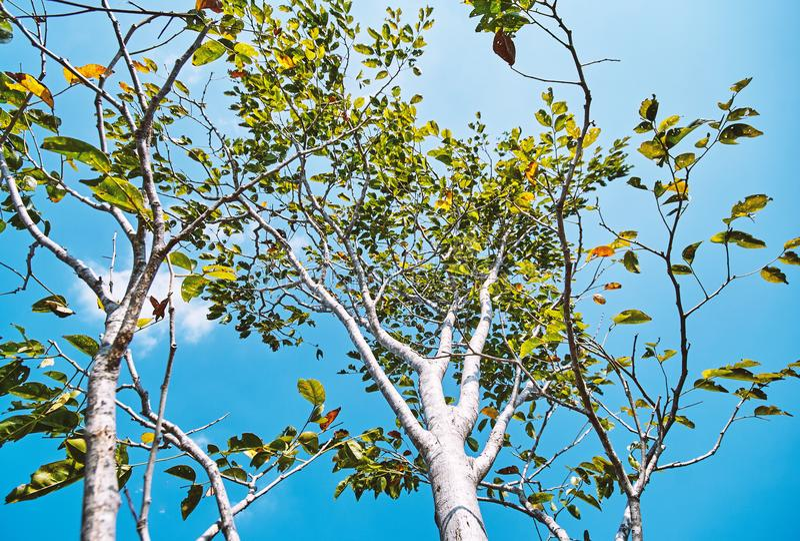 A opinião de baixo ângulo do tronco de árvore ramifica com cor verde e alaranjada com fundo do céu azul fotografia de stock