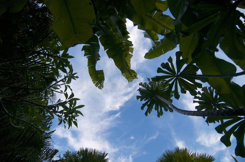 Opinião de baixo ângulo em plantas tropicais fotografia de stock royalty free
