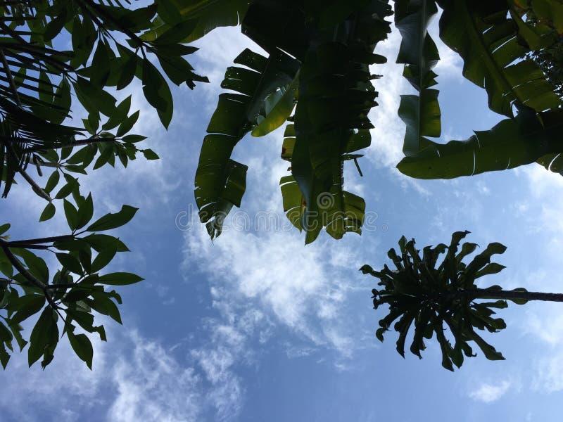 Opinião de baixo ângulo em plantas tropicais fotos de stock royalty free