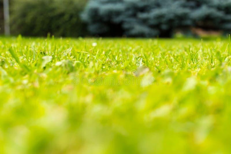 Opinião de baixo ângulo a grama fresca verde fotografia de stock royalty free
