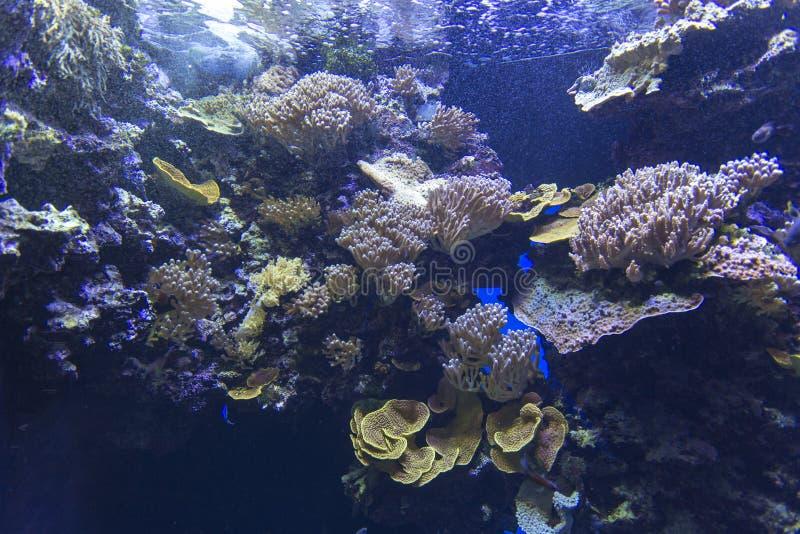 Opinião de Coral Reef imagens de stock royalty free