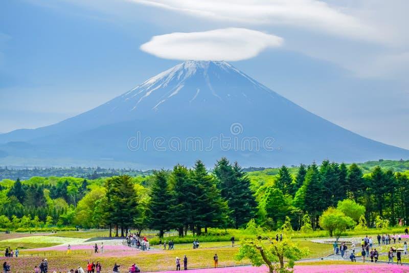 Opinião de Monte Fuji atrás do campo de flor colorido em Fuji Shibazakura Fastival fotografia de stock royalty free