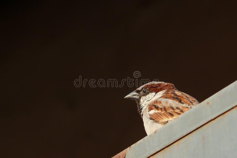 Opinião de olho de pássaro fotos de stock royalty free