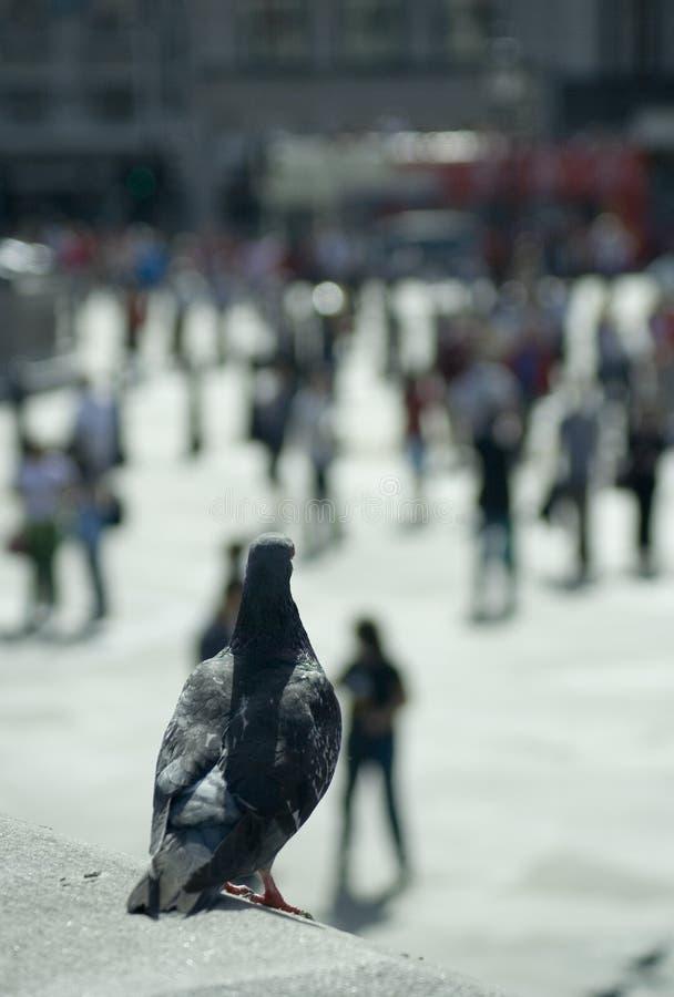 Opinião de olho de pássaro imagem de stock