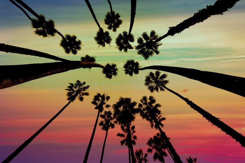 Opinião de palmeiras de Califórnia de baixo em Santa Barbara foto de stock