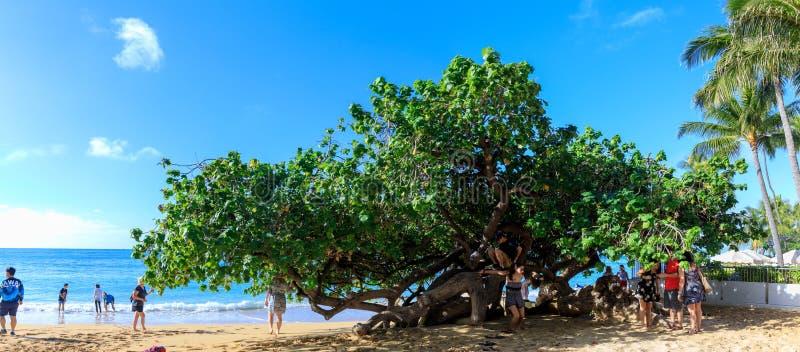 Opinião de Paranomic da praia de Oahu Waikiki com árvore original imagens de stock