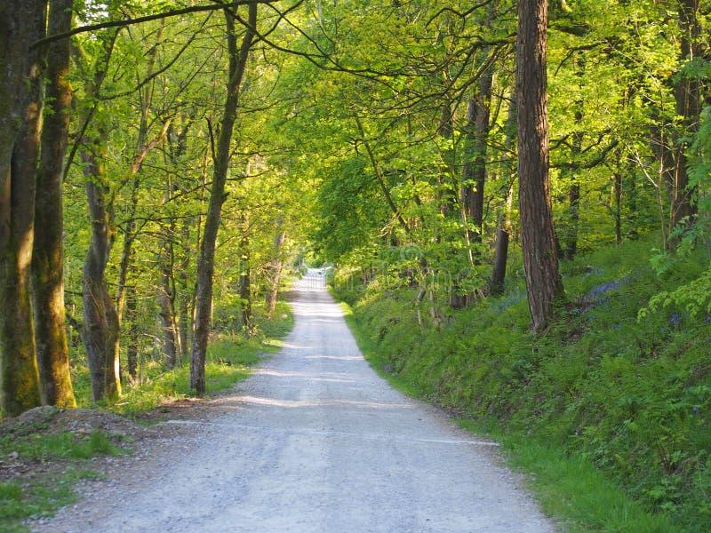 opinião de perspectiva uma pista estreita do país que corre embora a floresta ensolarado brilhante da mola com um dossel circunvi imagens de stock