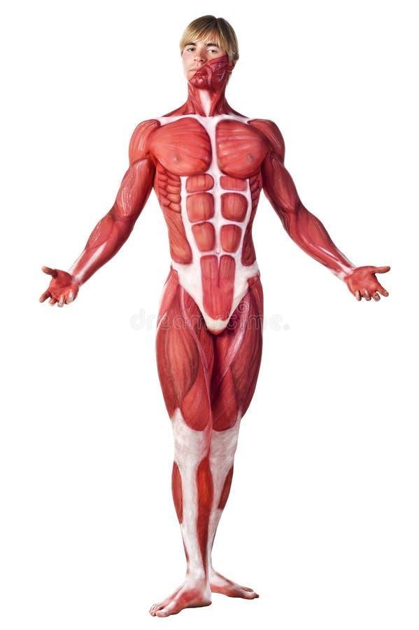 Opinião dianteira do homem do músculo fotografia de stock