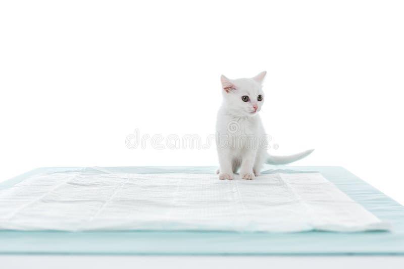 opinião dianteira o gatinho na tabela fotografia de stock