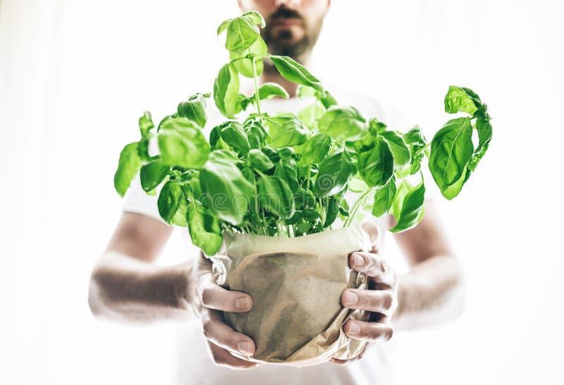 Opinião dianteira o homem que guarda a planta verde fresca em pasta da manjericão foto de stock