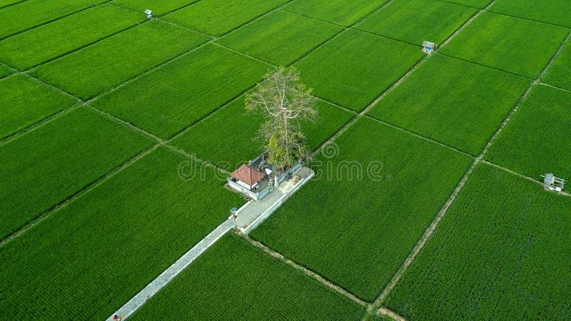 Opinião disparada Aearial do campo do arroz imagens de stock royalty free