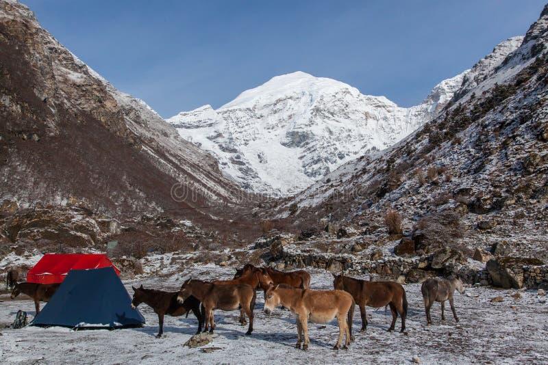 Opinião do acampamento base da montanha de Jumolhari fotografia de stock