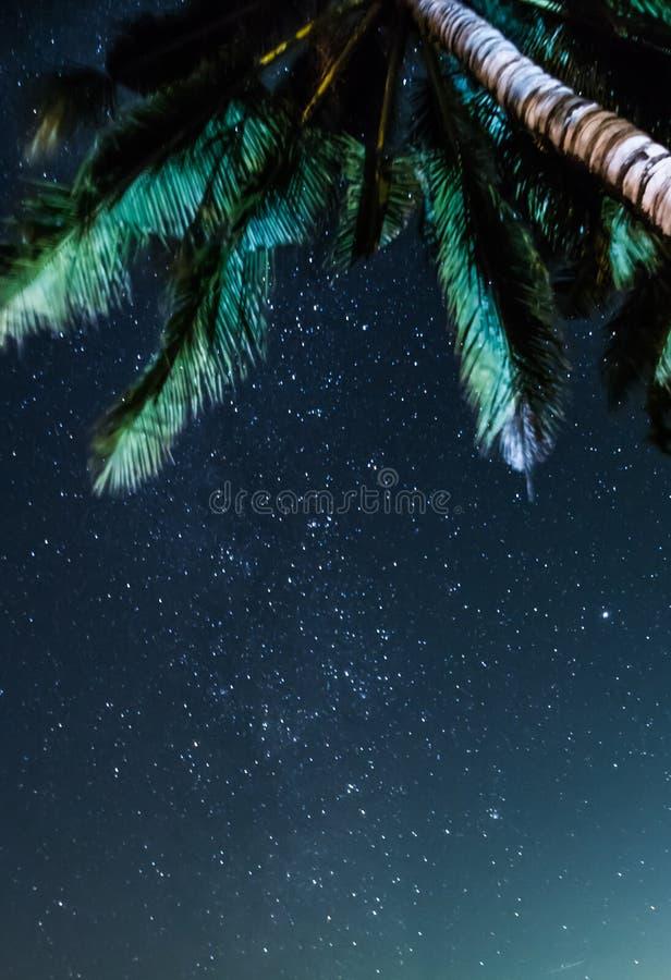 A opinião do céu noturno sob a palma de coco stars a Via Látea em Tailândia imagens de stock royalty free