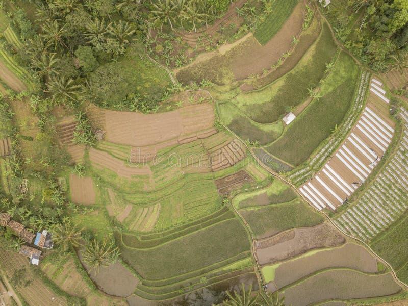 Opinião do campo do arroz fotos de stock royalty free