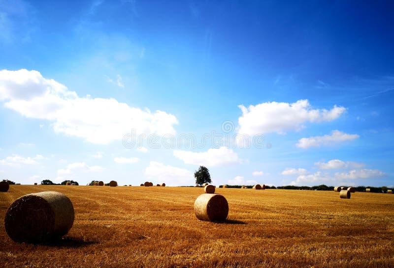 Opinião do campo do verão imagens de stock