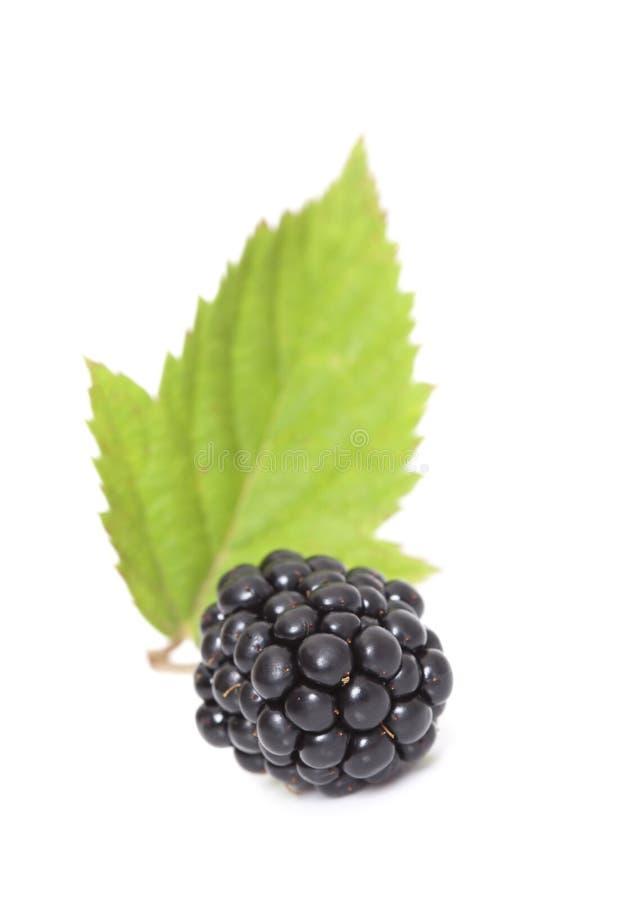 Download Blackberry Em Um Fundo Branco Foto de Stock - Imagem de objeto, bagas: 29839690
