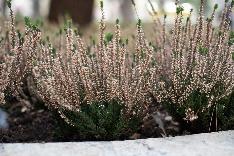 Opinião do close-up os wildflowers para dentro do jardim fotografia de stock