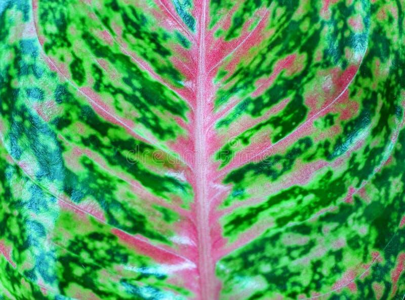Opinião do close-up, vista superior, folhas verdes e cor-de-rosa bonitas, texturas naturais imagem de stock royalty free