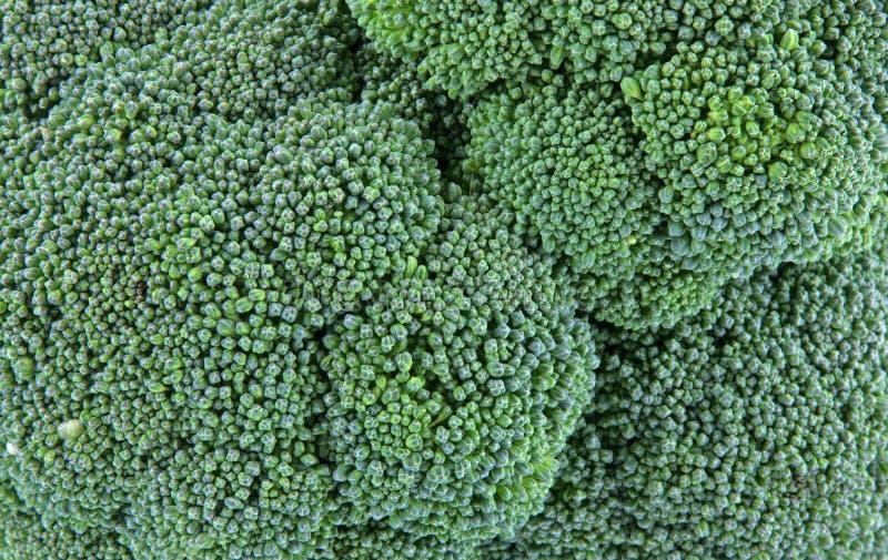 Opinião do fim da cabeça dos bróculos fotografia de stock