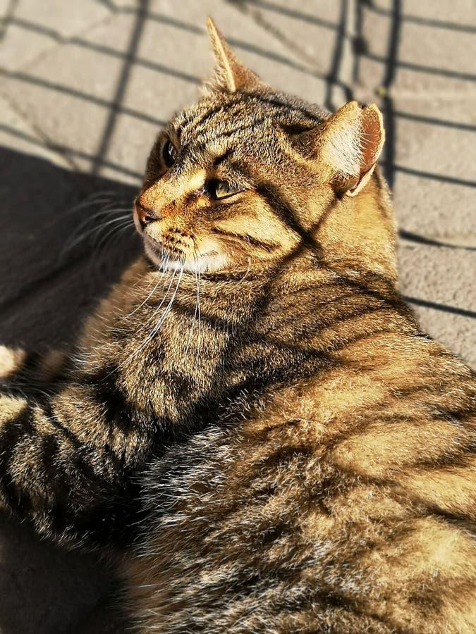 A opinião do gato da rua o gato fotos de stock royalty free