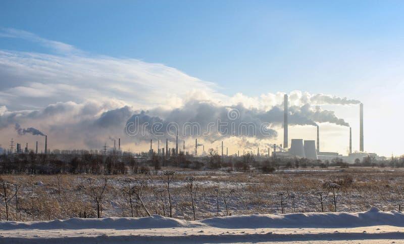 Opinião do inverno da planta imagens de stock