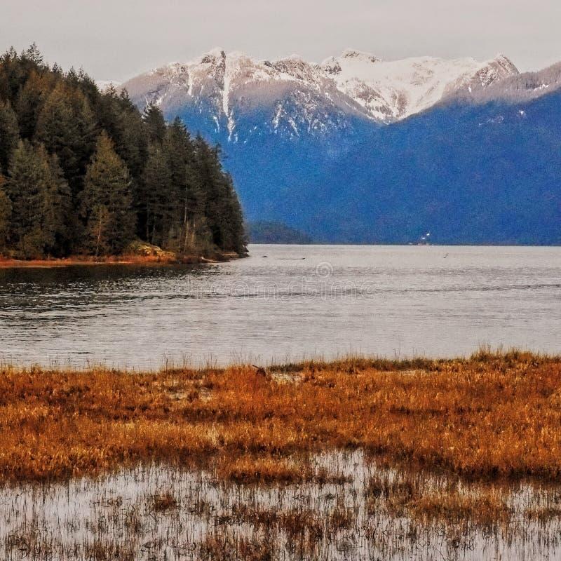 Opinião do lago Pitt em um dia nublado fotos de stock