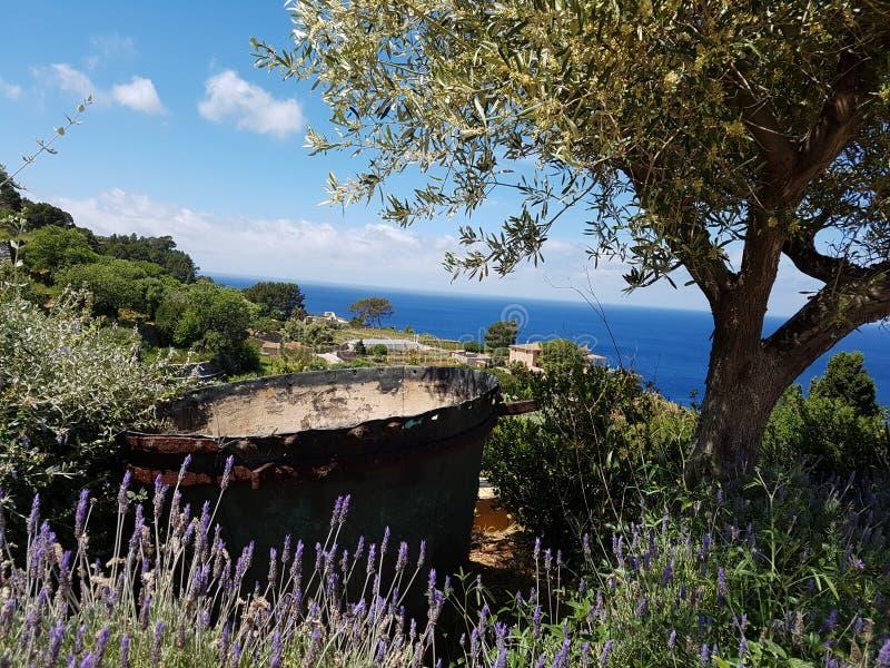 Opinião do mar do vinery imagens de stock royalty free