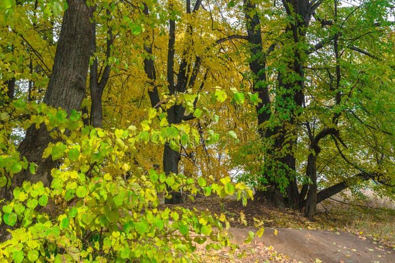 Opinião do outono de um bosque bonito do carvalho com uma mistura de árvores de Linden do álamo tremedor e do vidoeiro Verão indi imagem de stock royalty free